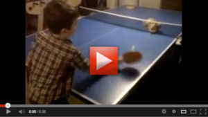 Ping Pong Cat Video